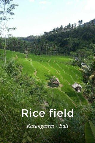 Rice field Karangasem - Bali