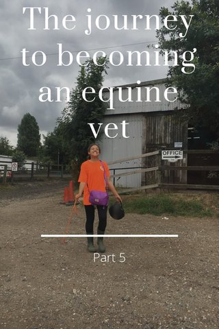 The journey to becoming an equine vet Part 5