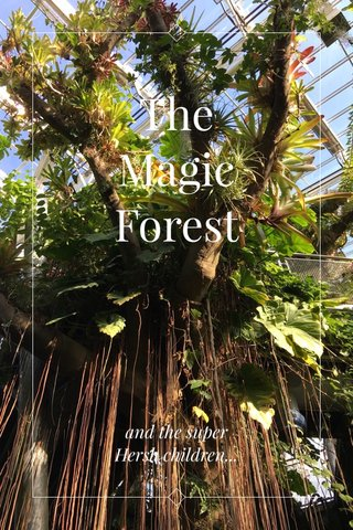 The Magic Forest and the super Hersh children...