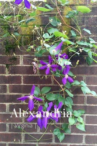 Alexandria | Virginia |
