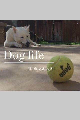 Dog life #halovsbodhi