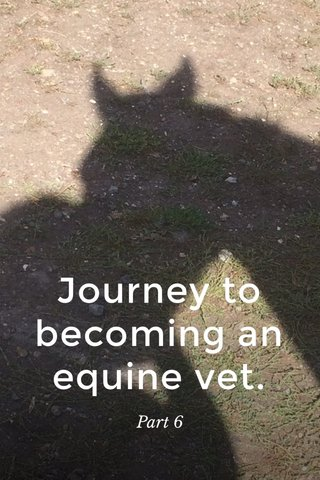 Journey to becoming an equine vet. Part 6