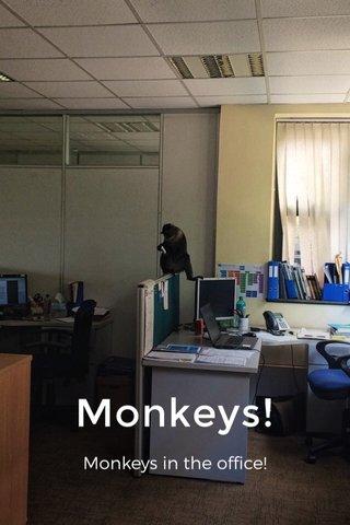 Monkeys! Monkeys in the office!