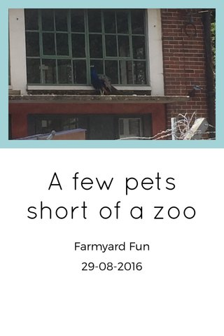 A few pets short of a zoo