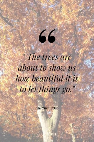 """"""" The trees are about to show us how beautiful it is to let things go."""" Autumn 2016"""