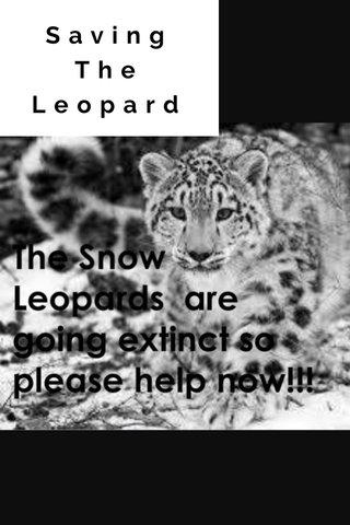 Saving The Leopard