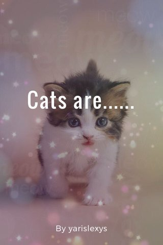 Cats are...... By yarislexys