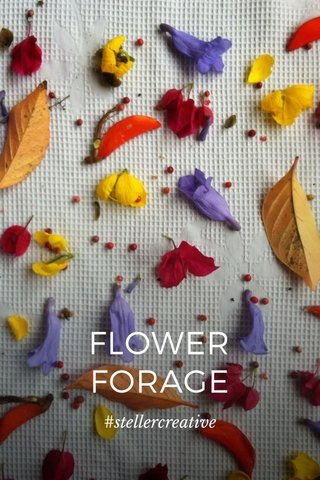 FLOWER FORAGE #stellercreative