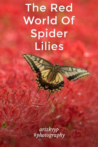 The Red World Of Spider Lilies arizkyyp #photography