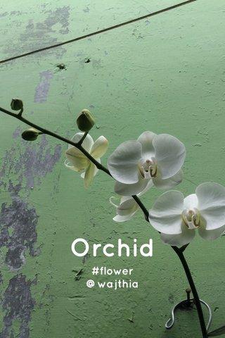 Orchid #flower @wajthia