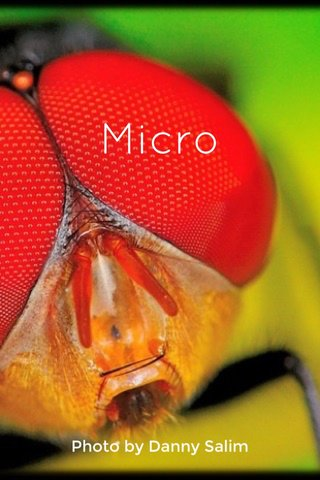 Micro Photo by Danny Salim