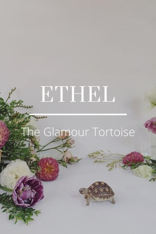 ETHEL The Glamour Tortoise