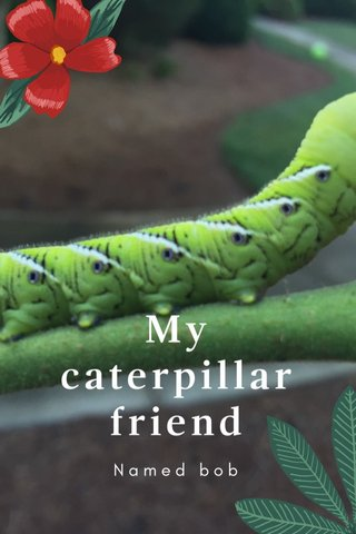 My caterpillar friend Named bob