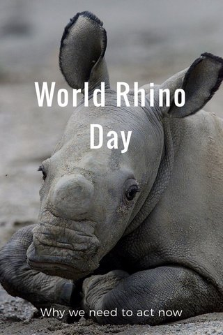 World Rhino Day Why we need to act now