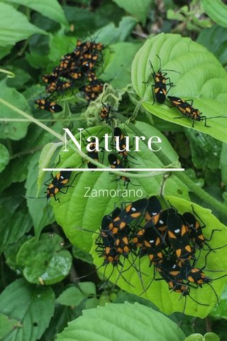 Nature Zamorano