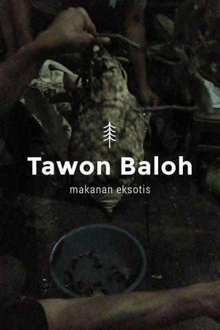 Tawon Baloh makanan eksotis
