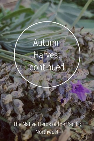Autumn Harvest continued The Native Herbs of the Pacific Northwest
