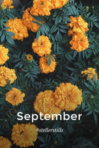 September #stellerstills