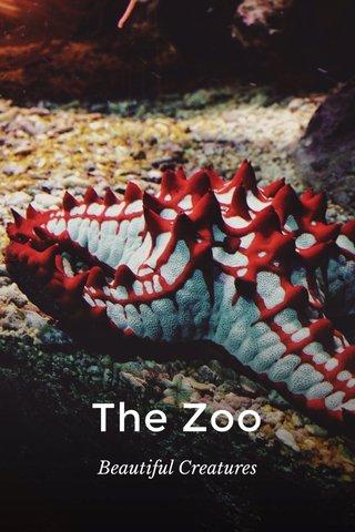The Zoo Beautiful Creatures