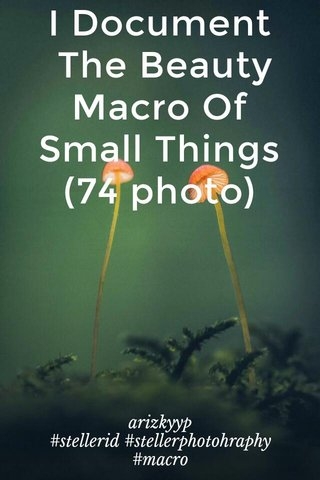 I Document The Beauty Macro Of Small Things (74 photo) arizkyyp #stellerid #stellerphotohraphy #macro