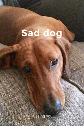 Sad dog Missing you