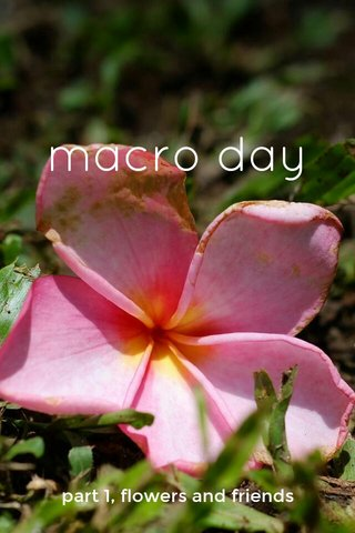 macro day part 1, flowers and friends