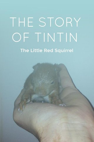 THE STORY OF TINTIN The Little Red Squirrel