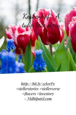Keukenhof- A tulip love story http://bit.ly/2cl0rPx #stellerstories #stellerverse #flowers #lovestory - Nidhipatel.com