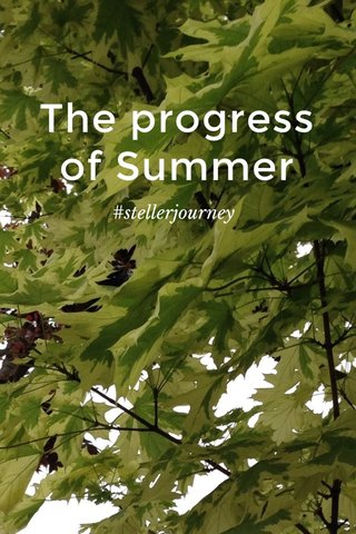 The progress of Summer #stellerjourney