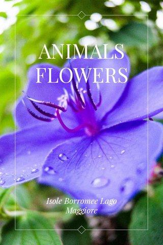 ANIMALS FLOWERS Isole Borromee Lago Maggiore