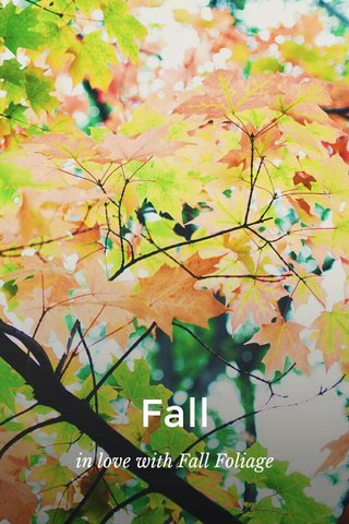 Fall in love with Fall Foliage
