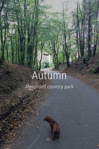 Autumn Almondell country park