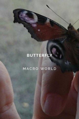 BUTTERFLY MACRO WORLD