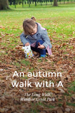 An autumn walk with A The Long Walk, Windsor Great Park