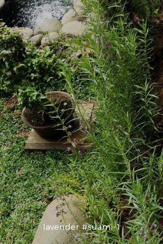 lavender #suami-1