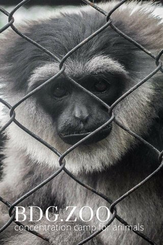 BDG.ZOO concentration camp for animals