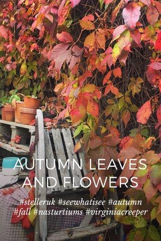 AUTUMN LEAVES AND FLOWERS #stelleruk #seewhatisee #autumn #fall #nasturtiums #virginiacreeper
