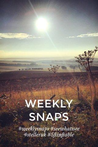 WEEKLY SNAPS #weeklysnaps #seewhatisee #stelleruk #5ftinftable