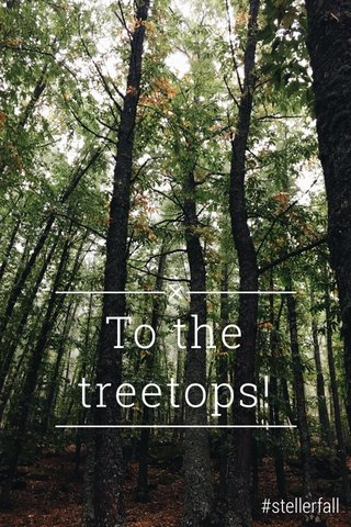 To the treetops! #stellerfall