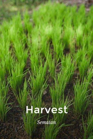 Harvest Sematan