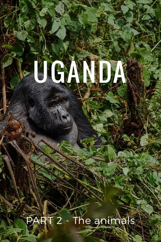 UGANDA PART 2 - The animals