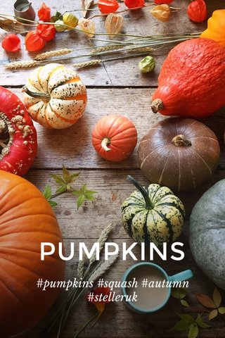 PUMPKINS #pumpkins #squash #autumn #stelleruk