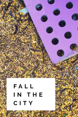 FALL IN THE CITY