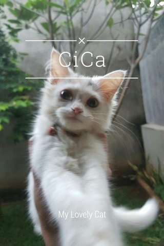 CiCa My Lovely Cat
