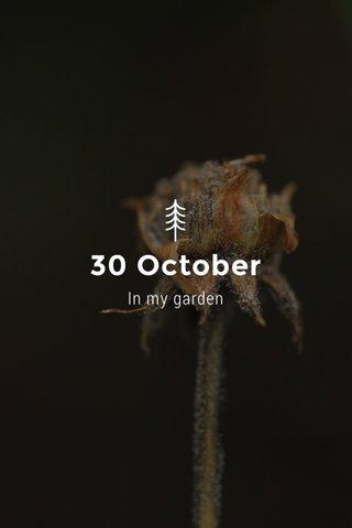 30 October In my garden