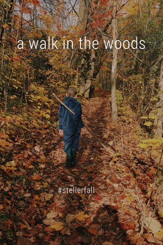 a walk in the woods #stellerfall