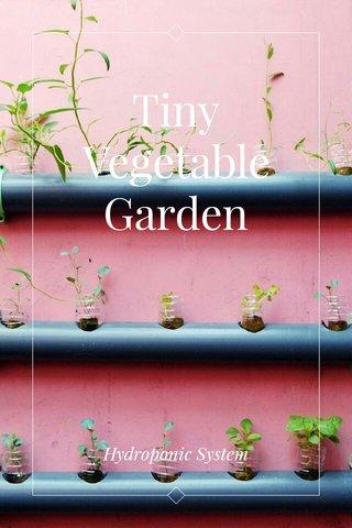 Tiny Vegetable Garden Hydroponic System