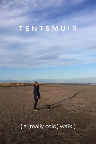 TENTSMUIR { a (really cold) walk }