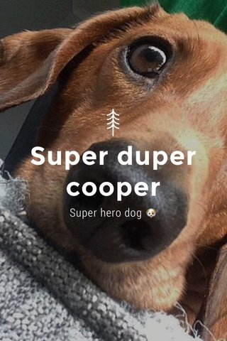 Super duper cooper Super hero dog 🐶