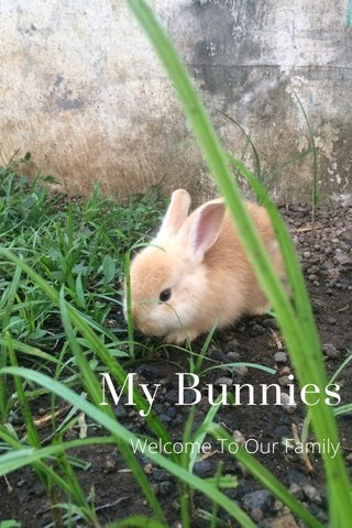 My Bunnies Welcome To Our Family